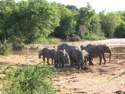 YANKARI National Park2